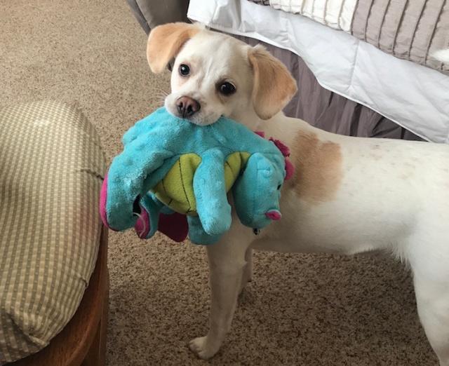 Nacho and Dragon
